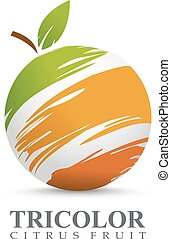 Citrus fruit - Vector illustration of citrus fruit concept