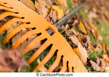 Close up of a rake and leaves in the garden