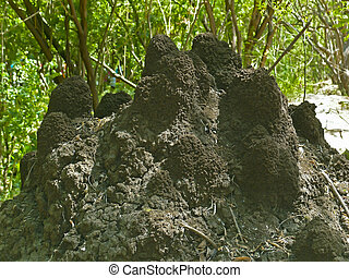 Anthill - An anthill in the soil