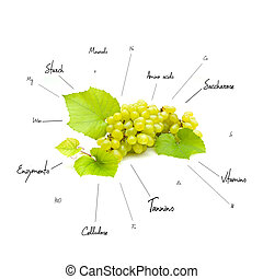 The chemical composition of grapes