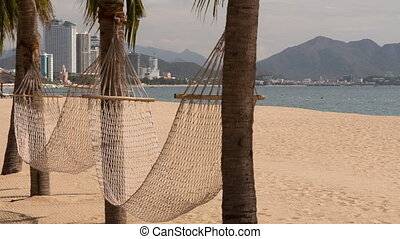 view of two hammocks across palm trees on sand beach -...