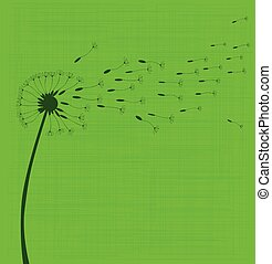 Dandelion Seeds - A dandelion in seed over a green...