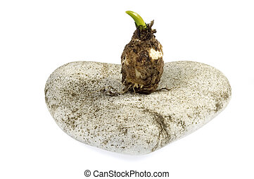 bulb. baby plant and stone