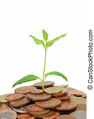 Money plant - Seedling growing from a pile of coins