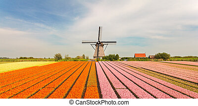 Old Dutch windmill with blooming tulips in front