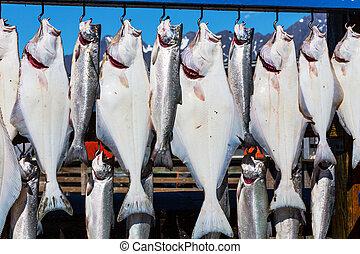 Fishing in Alaska - Fresh caught fish in Seward, Alaska, USA