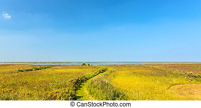 Panoramic image of reed in front of the Dutch IJsselmeer -...