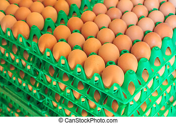 Crates with fresh eggs on an organic chicken farm - Plastic...