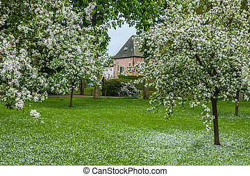 Dutch orchard with blossoming trees on a medieval estate