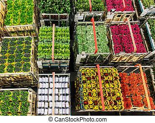 plantas, subasta, flores, flor, Cajones