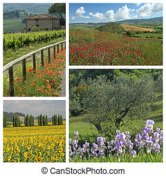 flowering countryside in Tuscany- group of images