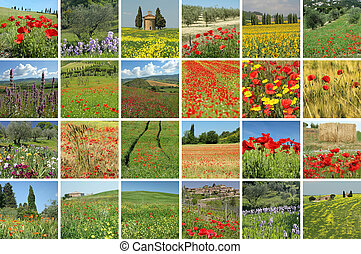 flowering tuscan fields collage, Italy
