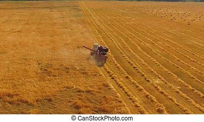 Combine Harvester Working In The Field Of Wheat - In the...