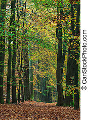 Autumn forest path in the Dutch national park Veluwe -...
