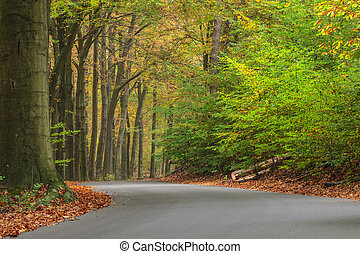 Curved autumn road in Dutch national park Veluwe - Curved...