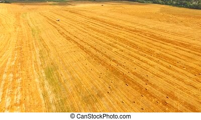 Bright Yellow Stubble Field At Picturesque Terrain - This is...