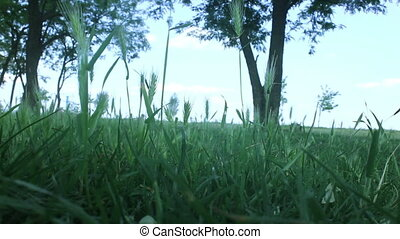 landscape with green grass