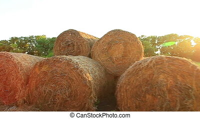Bale of hay in the field - Bale of hay in a field at sunset...