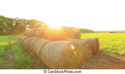 harvesting of hay bales in a field at sunset