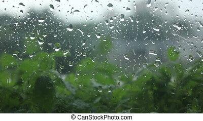 water drops, plants outside