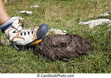 Human boot stepping on cow shit lying on mountain path near...