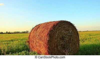 Bale of hay in the field