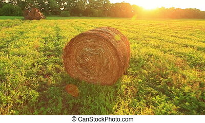 hay field - hay in a field at sunset in the summer harvest
