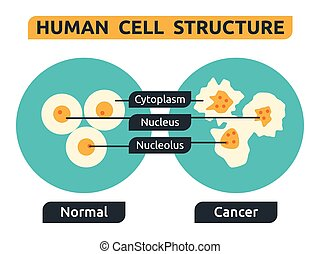 Cell - Illustration of cell structure; normal vs cancer