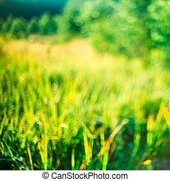 Nature Blurred Background Of Out Of Focus Green Grass Or...