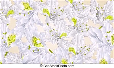 White rhododendron blossoms - Animation of illustration...