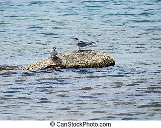 Seabirds - Sea birds sitting on a rock