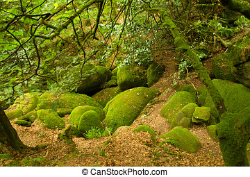 Deep forest in Brittany, France - Rocky deep forest in...