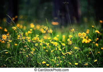 defocus view of meadow with bright yellow flowers -...