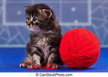 Cute kitten - Cute little kitten with bright red yarn ball...
