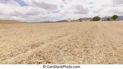 Aerial. Drone Flight Over Field of Corn in Spanish Andalucia