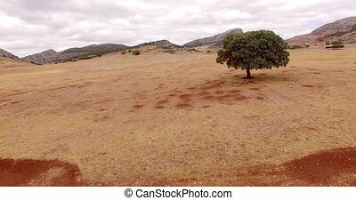 Aerial. Drone Flight Over Dry Field of Grass in Mountains