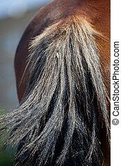 Draft horse tale closeup
