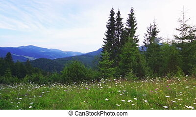 Mountain Landscape in the Carpathian