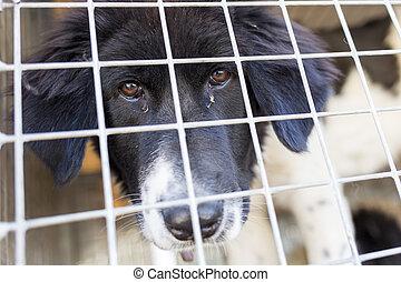 gaiola, cão,  ownerless