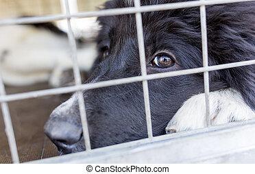 Ownerless, cão, em, gaiola,
