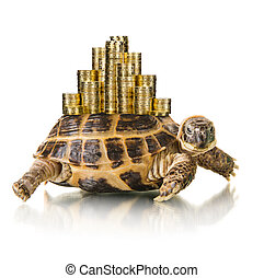 tortoise - typical tortoise whith many gold coin , on white...