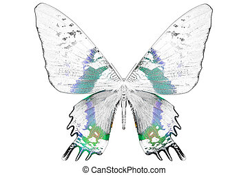 Black and white image of beautiful butterfly with colorful...
