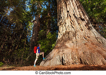 Guy stands near big tree in Redwood California during summer...