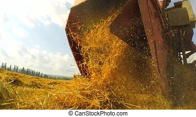 Fresh Mown Hay Falling Out Of Combine Trailer - CLOSE UP:...