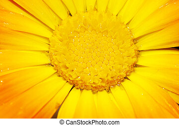 stem of a gerbera flower - macro picture of the stem of a...