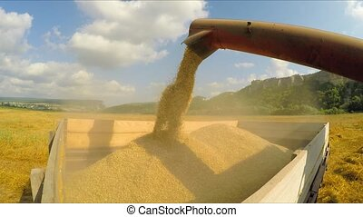 Combine Unloading Grains Into Trailer - CLOSE UP: This is a...