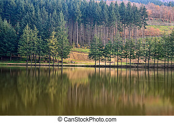 lake with trees reflex