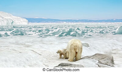 She-bear with bear cubs stand on snow in the Arctic