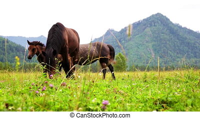 Three horses are grazed on a meadow against mountains