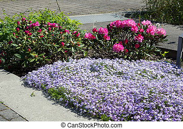Flower bed - beautiful flowers in a flower bed